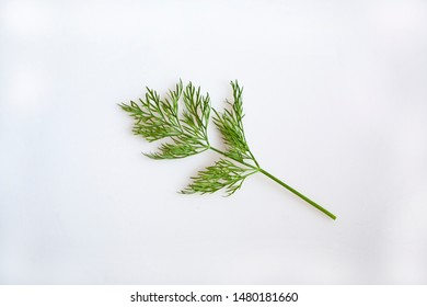 Sprig of the Herb Dill on a White Background