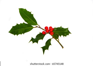 a sprig of holly isolated on white