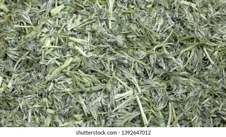 Sprig of medicinal wormwood. A sprig of wormwood. Artemisia, wormwood.