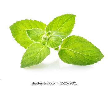 Sprig of mint isolated on a white background