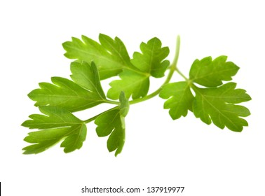 sprig of parsley isolated on white background