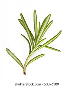 A sprig rosemary herb isolated on white background