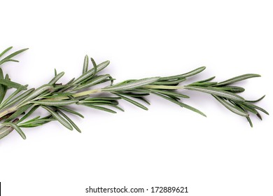 Sprig of rosemary. Isolated on a white background.