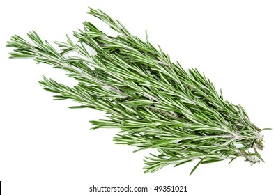 A sprig of Rosemary officinalis, the herb used in cooking