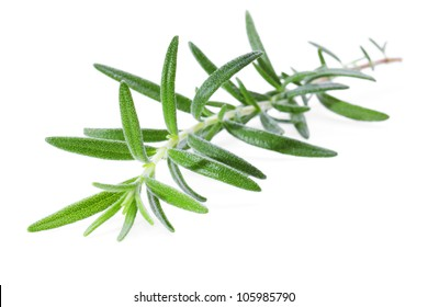 A sprig of rosemary on a white background.