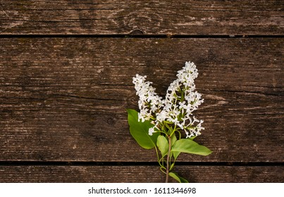 sprig of white lilac on a wooden table. white flowers on a wooden background.