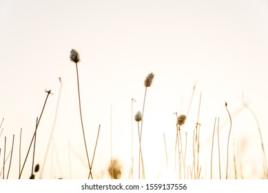 Sprigs of dried plants in summer, nature background.