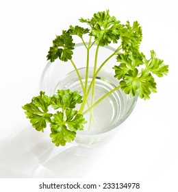 Sprigs of a fresh parsley in a glass