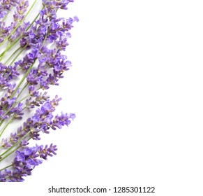 Sprigs of lavender isolated on white background.Top view
