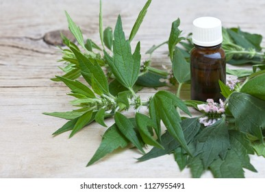 Sprigs of a medicinal plant of the motherwort (Lat. Leonurus) and a medicine bottle with a sedative tincture on a wooden background. Free space for text. Close-up view