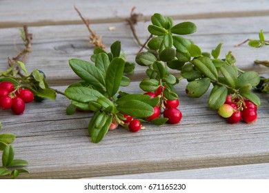 Sprigs of red berries are  on the wooden table in rustic style