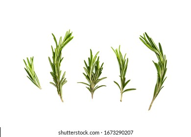 Sprigs of rosemary isolated on a white background