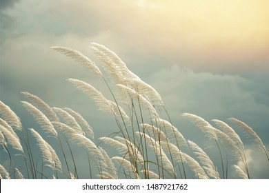Spring abstract nature background with reeds  grass