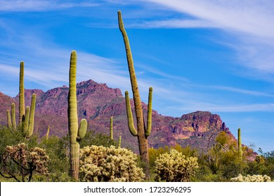 Spring afternoon in the Superstition Mountains in Arizona