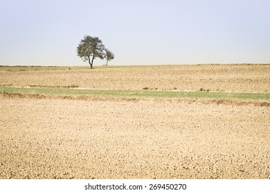 Spring agricultural fields with small  green plants and fallow plowed soil. Background.