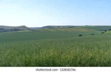 Spring agricultural landscape, Podilski Tovtry National nature park, Podolia region of Ukraine