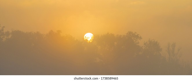 Spring is in the air with the lush green foliage of trees in a foggy green pasture in sunlight at sunrise in a misty spring morning