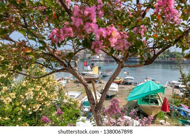 Spring in Amasra and Colorful New Blooming Flowers