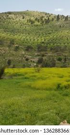 Spring in Amman Jordan