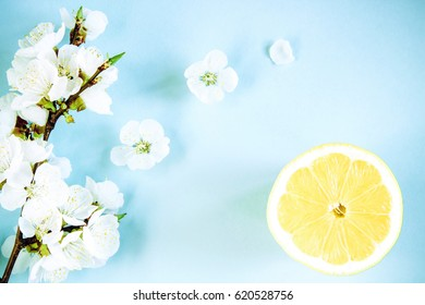 spring apricot blossom and citrus on a blue background top view