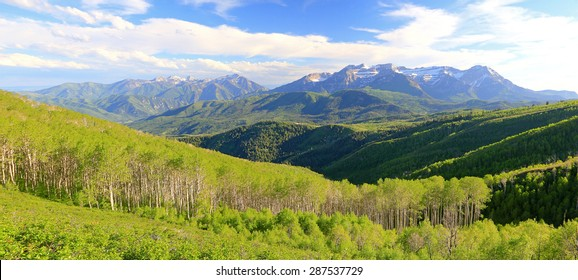 Spring aspen panorama in the Wasatch Mountains, Utah, USA.