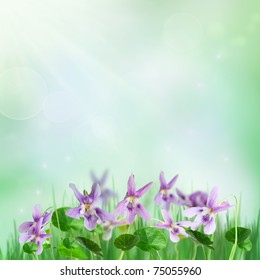 Spring background with beautiful forest violets and rays of light