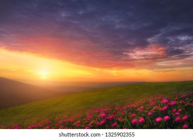 spring background with beautiful landscape with flowers at sunset