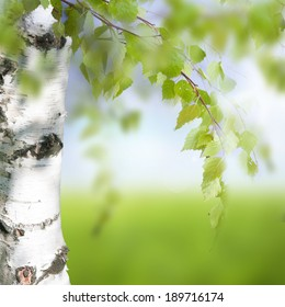 Spring background with bright green leaves of birch