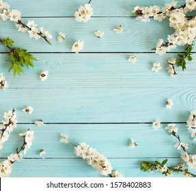 Spring background .cherry blossom flowers  on blue wooden backdrop top view . copy space.