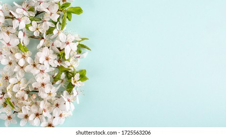 Spring background. Cherry blossom flowers on blue background. Top view. Copy space.