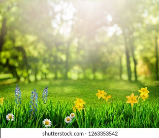 spring background with flowers and sunbeams
