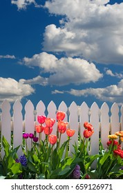 Spring Background with fluffy clouds and blue sky with tulips and a white picket fence