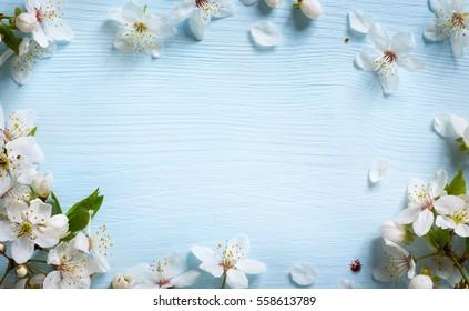 Frühlingshintergrund; frische Blume auf blauem Hintergrund.
