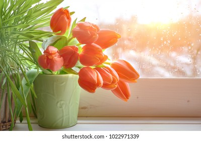 Spring background with green grass and bunch of orange tulips on window board on a sunset after rain. Space for your text.