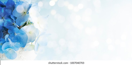 Spring background with hortensia