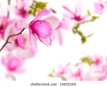 Spring background with magnolia flower