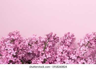 spring background mock up pink color, lilac flowers, place for text