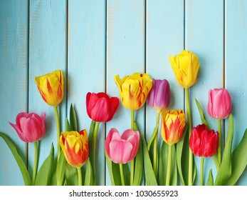 Spring background with multicolored tulips  on blue background