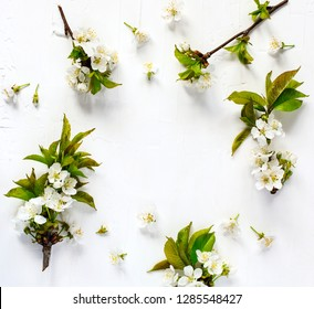 Spring background with pear blossom flowers, top view, springtime concept