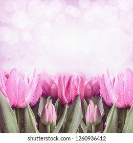 Spring background with pink tulips and bokeh lighting, front view, border