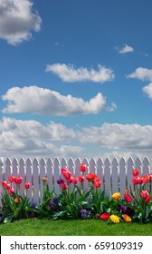 Spring background of puffy clouds in a blue sky with tulips and a white picket fence