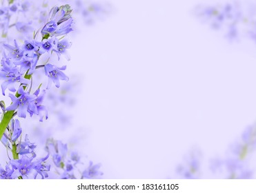 Spring background with purple hyacinth flowers