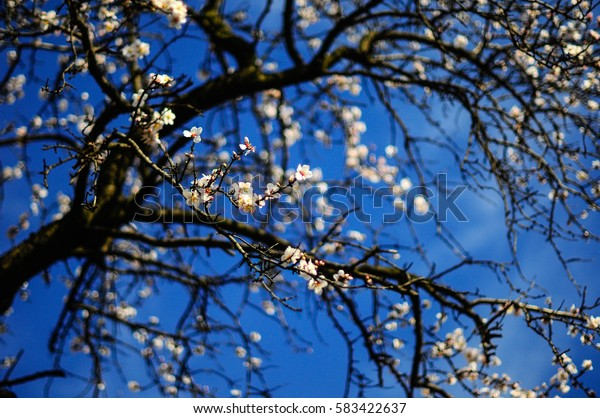 Spring background, Serbia