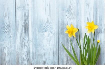 春天的背景与黄色水仙花花在蓝色木材质地。 美丽的自然乡村背景。 带复制空间的 Web 横幅