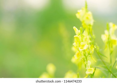 Spring background yellow small bokeh flowers.