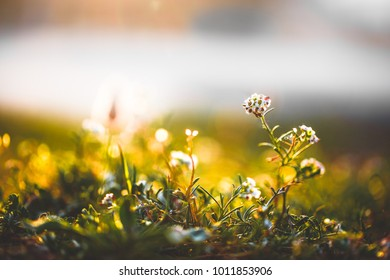 Spring. Beautiful flowers in field. Nature background