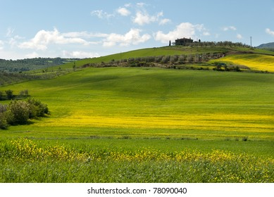 Spring in bloom on the hills of Grosseto in Tuscany
