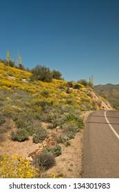 spring bloom in the Sonoran desert