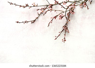 Spring blooming branch lying down on pink pastel background, blank space for a text