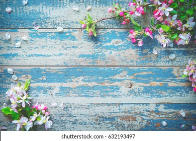 Spring blooming branches on blue wooden background. Apple blossoms